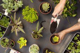 menanam tanaman di dalam rumah dapat memberikan kebahagiaan