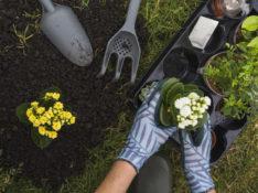 aktivitas berkebun di halaman dapat memenuhi kebutuhan vitamin D